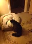 Pet harmony achieved copy